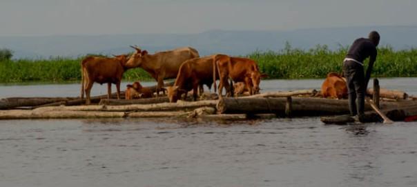 Congo River-3420