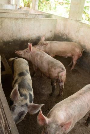 ECC Lutendeli Farm LO-4343