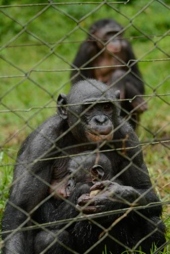 Lola ya Bonobo LO-4479