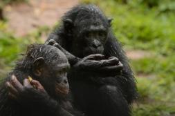 Lola ya Bonobo LO-4503